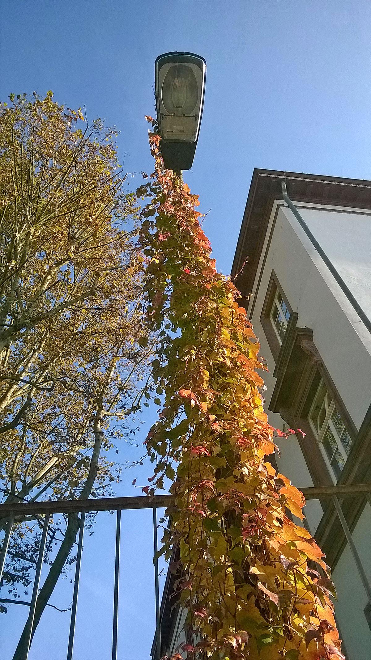 Herbst in Frankfurt-Bornheim