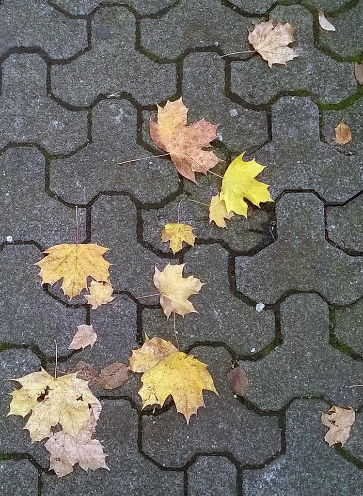 herbst-frankfurt-bornheim-4