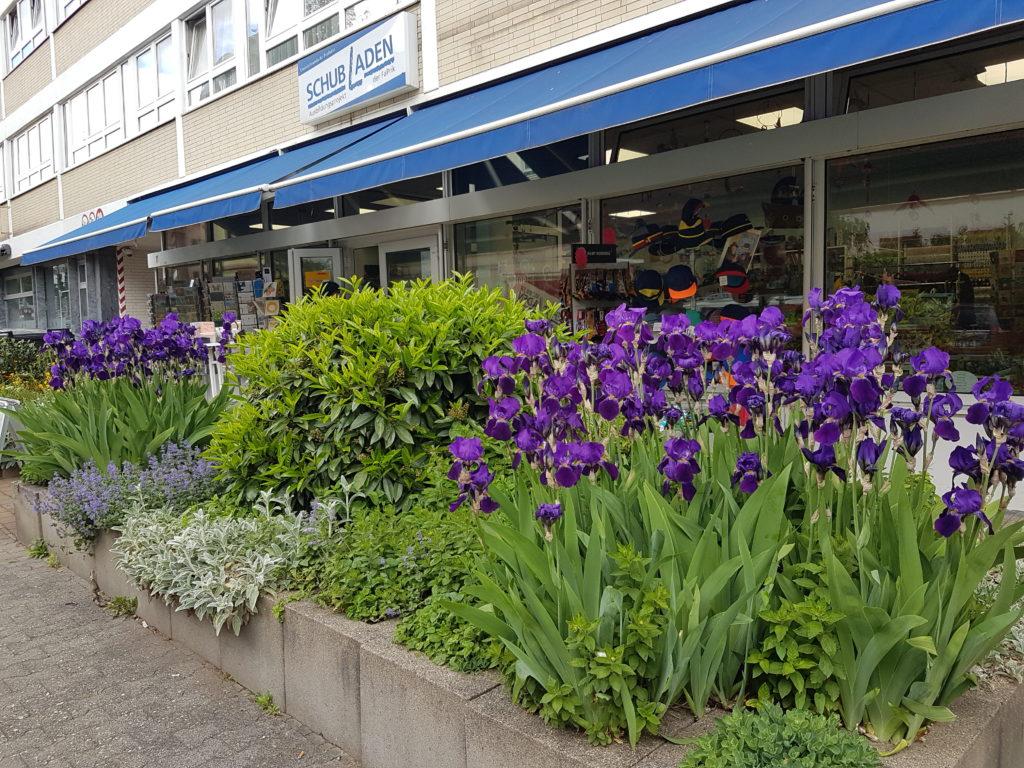 Schöne Blumenbeete in der Spessartstraße in Frankfurt Bornheim