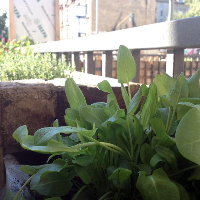Oasen an der Höhenstraße wieder grün