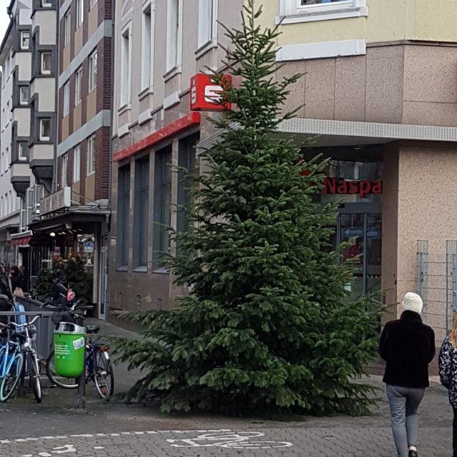 Weihnachtsbäume auf der Berger Straße